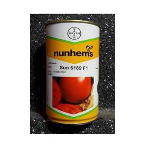 بذر گوجه 6189
