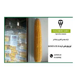 بذر ذرت دومیننت آمریکایی