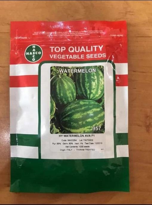 بذر هندوانه آوا F1 محصول شرکت ناسکو