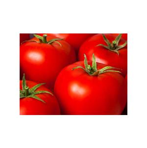 بذر گوجه رقم هیبرید جودیویس بذر آفتاب