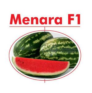 بذر هندوانه منارا