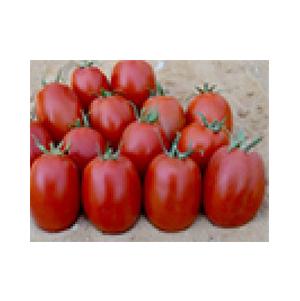 بذر گوجه رقم هیبرید ناسادت بذر آفتاب