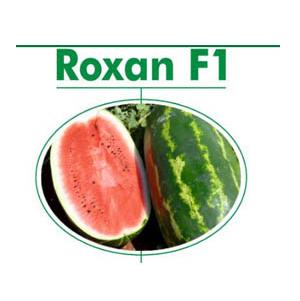 بذر هندوانه رکسوان